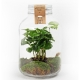 Plant in weckpot